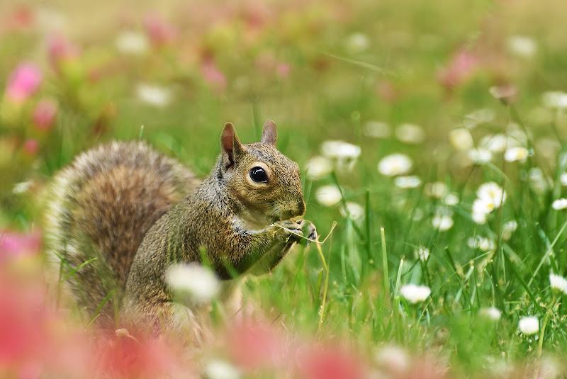 Spring squirrel di BASTET-Clara