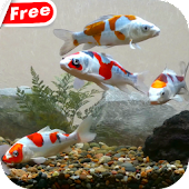 Koi Fish Tank Video Wallpaper