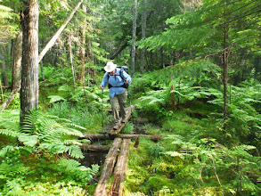 "Photo: Purple Navigating a ""Bog Bridge"" in the 100 Mile Wilderness"