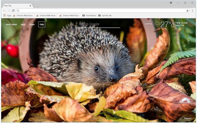 Hedgehog HD Wallpaper Cute Hedgehogs New Tab