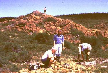 Plant collecting in northern Newfoundland