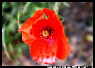 Photo: Quina meravella de flor ens trobem caminant!
