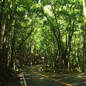 Man-made Forest  by Penn De Los Santos - Landscapes Travel ( nature, green, color, food, concept )