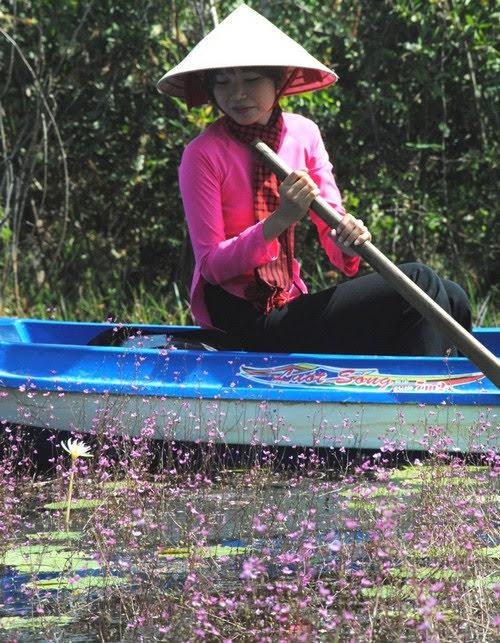 Vườn quốc gia Tràm Chim, nhĩ cán tím quyến rũ 3