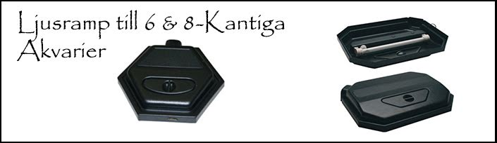 6 & 8-Kantiga