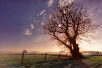 Photo: Mistige ochtend. Foto: Coen Waltmans