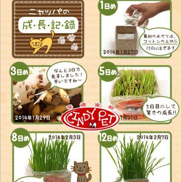 貓草/小麥草種子1包裝