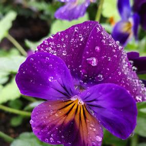 by Karl Erik Straarup - Flowers Single Flower