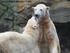 Photo: Manno, schon wieder will sie an meinen Bart ;-)