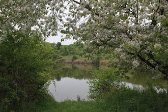 Photo: Kotlíky sú dva rybníky, či priehradné jazierka, toto je horné