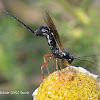 Wasp ID?