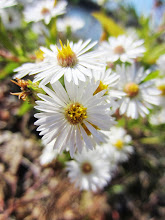 Photo: Little white flowers at Eastwood Park of Five Rivers Metroparks in Dayton, Ohio.