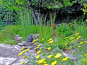 Photo: Golden flowers of Moonlight Yarrow highlight the water garden and surrounding plantings.