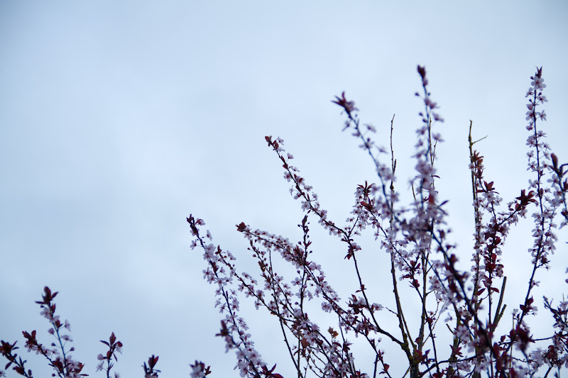 Photo: The Ends Are Orchard, The Sky, Dawn