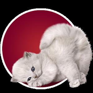 Угадай животное for PC and MAC