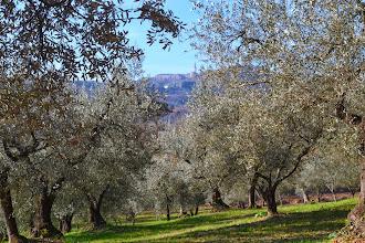 Photo: olivi