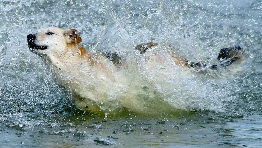 Splash by Rachel Bird - Animals - Dogs Portraits ( rachel bird photography )