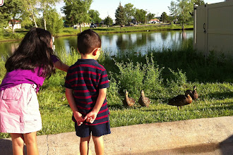 Photo: As I was packing the car, we noticed ducks in the pond
