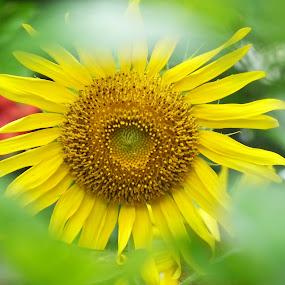 Soft n Cute by Debartist Lightpainter - Flowers Flowers in the Wild