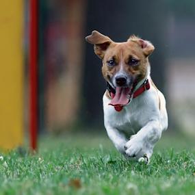 Mellanie by Miroslav Socha - Animals - Dogs Playing