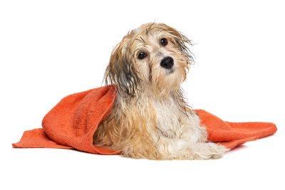 Vård och hälsa hund