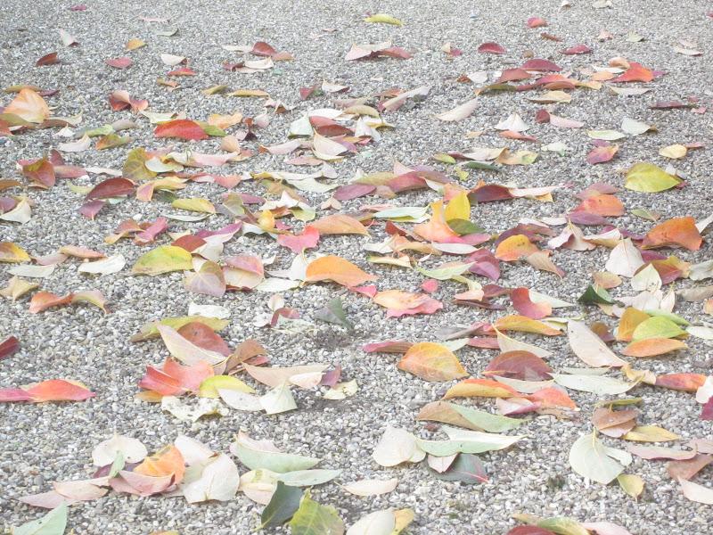 Foglie d'autunno di emanuela_dolci