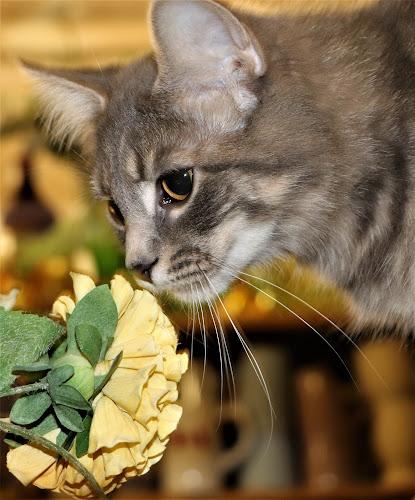 Sylvia  by Linda    L Tatler - Animals - Cats Portraits