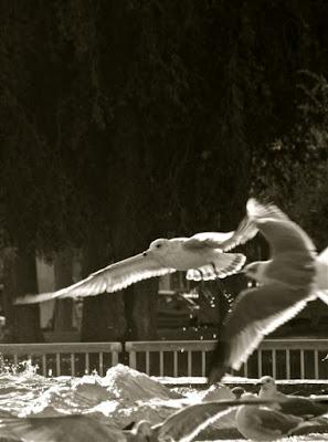 The birds di sina