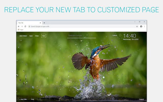Kingfisher Wallpaper HD Kingfishers New Tab