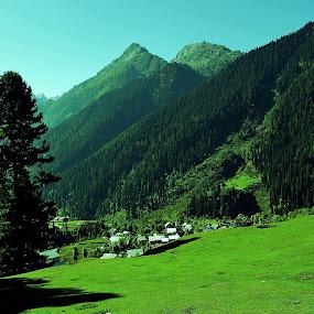 kashmir,india by Jayanta Roy - Landscapes Mountains & Hills ( hills, nature, green, kashmir, forest, india )