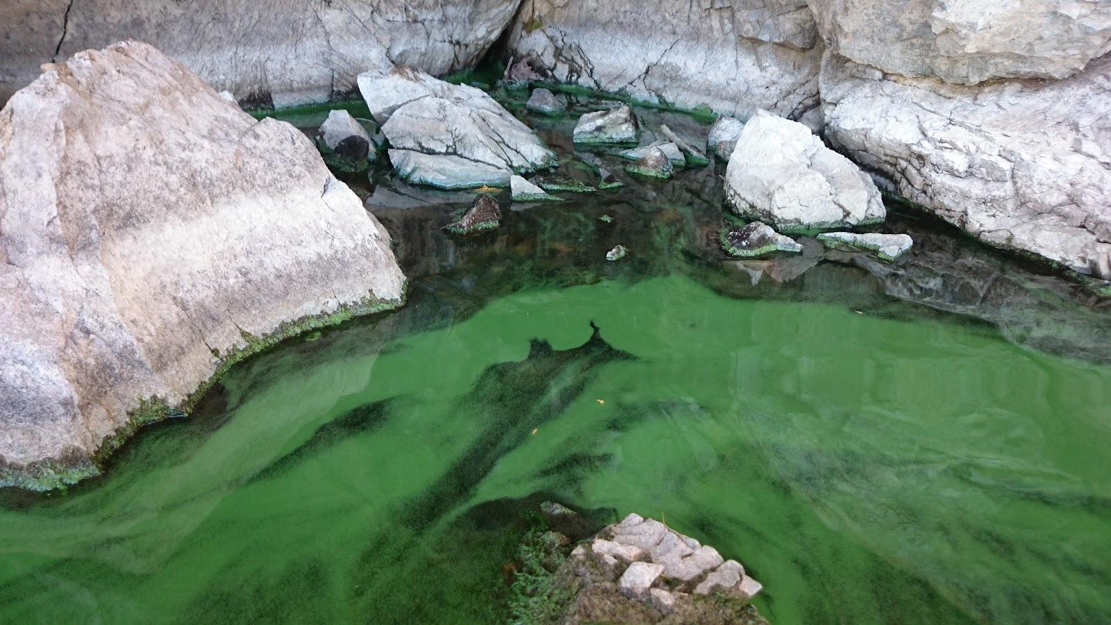 pond algae.JPG