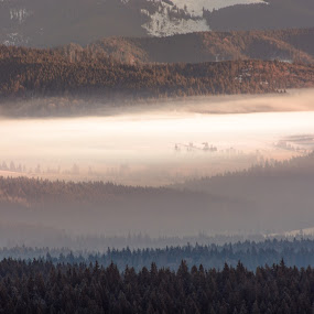 Fog light by Adrian LUPSAN - Landscapes Mountains & Hills ( mountains, winter, fog, snow, bucovina, light, sun )