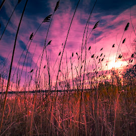 by Keith Lowrie - Nature Up Close Leaves & Grasses