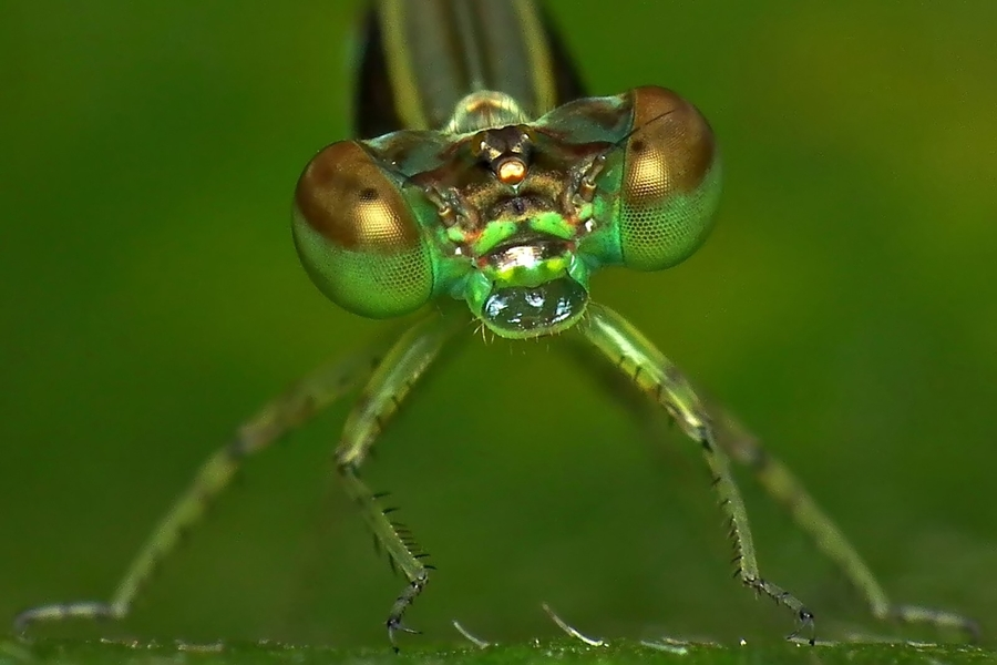 by Bram Yuli - Animals Insects & Spiders
