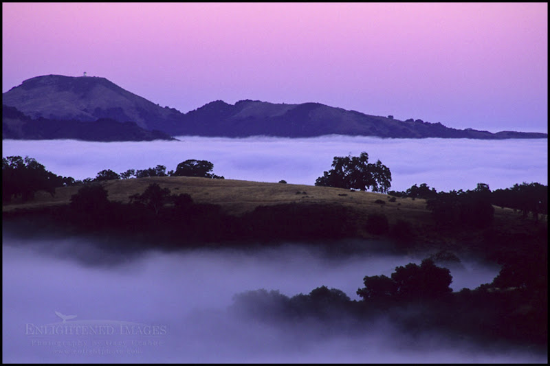 Photo: Coastal Fog, hills, and trees at dawn, Cachaqua Road, above Carmel Valley, Monterey County, California  Trying again as part of an experiment; there must be a G+ glitch going on somewhere...  This is the second post tonight to this same album, yet it only shows (1) photo in the album listed above the photo, but if you click on that link, you'll see 31 images in my California album.  Oh well... hope it self corrects soon. At least I don't think it's just me...