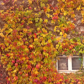 Autumn is in charge by Ciprian Apetrei - Instagram & Mobile Android ( leaves, mobile photos, autumn, window, brittany )