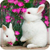 Funny Bunnies live wallpaper