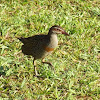 Buff banded rail.