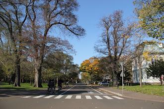 Photo: 北海道大学メインストリート