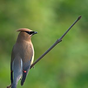 Bird15m (9).jpg