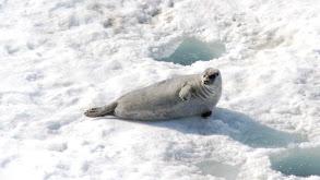 Newfoundland: Moose Pies & Seal Flippers thumbnail