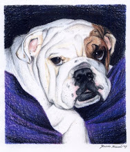 Photo: Tugga the Bulldog