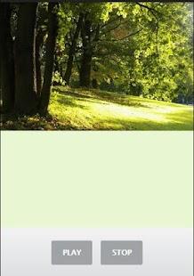 Forest Sound - náhled