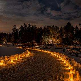 Christmas Celebration by Joseph Law - Public Holidays Christmas ( statue, winter, cold, alberta, snow, devon, christmas, candle light, trees, walkway, botanical, garden, moonlight )