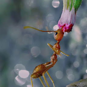 up by Handri Fitrido - Animals Insects & Spiders
