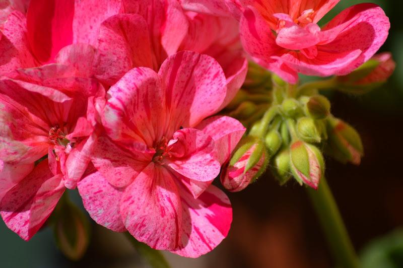 """""""Ogni fiore che sboccia ci ricorda che il mondo non è ancora stanco dei colori."""" di mony29"""
