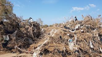 Plásticos enredados en las matas de la rambla.