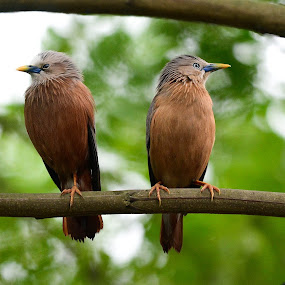 Unhappy couple.. by Sofia Zaman - Animals Birds ( sky, nature, pair, greenery, bunch, bokeh, birds )