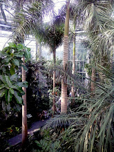 Photo: Up in the canopy looking down in the Jungle Room.
