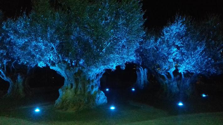 Gli olivi si vestono di blu... di pattylane